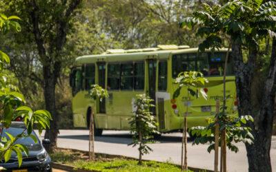 Alcaldía de Bucaramanga espera sembrar, durante este cuatrienio, más de 45 mil árboles