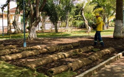 Alcaldía sembrará 10.000 metros cuadrados de prado para embellecer parques y áreas comunes de Bucaramanga