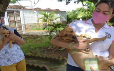 Exitosa jornada de vacunación antirrábica en Bucaramanga: inmunizados 6.476 animales entre caninos y felinos