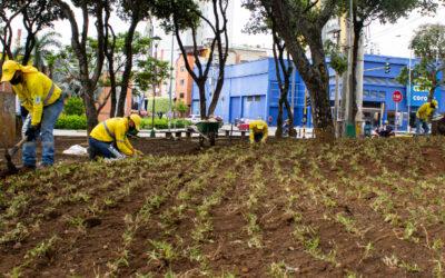 Actividades de desorille contribuyen a crear nuevas zonas verdes en Bucaramanga