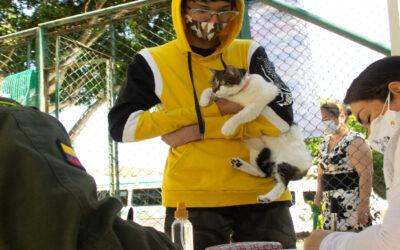 6.700 animales entre caninos y felinos se han vacunado contra la rabia en Bucaramanga